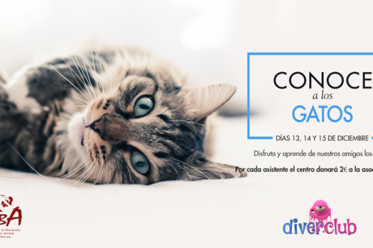 Talleres solidarios en Diverclub sobre gatos